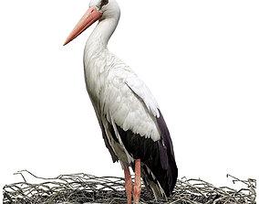 Stork 3D model banknote