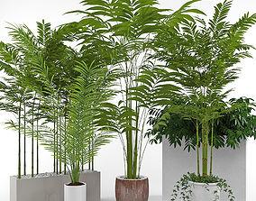 House plant 3 3D model