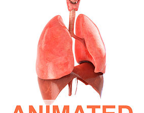 Lungs animated 3D asset