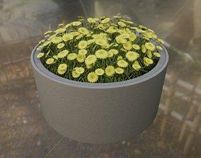3D asset Concrete Pot 1500mm with Yellow Flowers Version 2