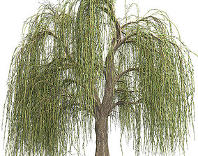 Weeping Willow Tree 3D model