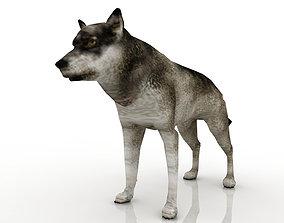 looking Wolf model