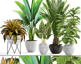 3D model Collection of plants