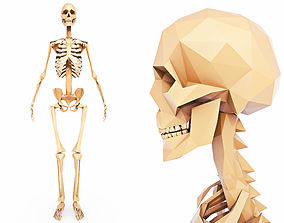 3D model Human Skeleton Low Poly