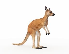 Kangaroo 1 3D
