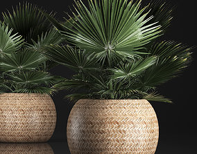 fan palm in the basket 3D