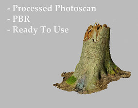 3D Fir Conifer Tree Trunk broken fallen Processed Scans