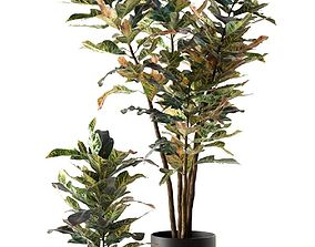 Croton Plants in Pots 3D model