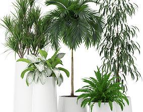 3D model Plants collection 374