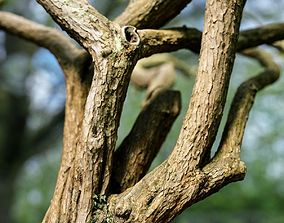 Huge Tree Environment Reference Asset 3D model