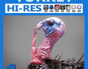 Turkey 3D