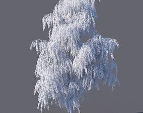 Winter Birch tree 3D model