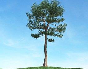 3D model Tall Skinny Tree