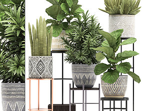 green 3D Collection of Exotic plants