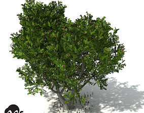 XfrogPlants Grey Mangrove 3D