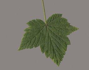 Leaf Currant 3D asset