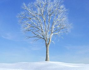tree 3D model Snow Covered Tree