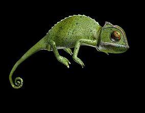 3D asset Chameleon walk rigged animated