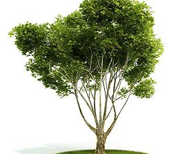 Lush Green Bushy Tree 3D model