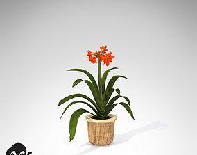 3D XfrogPlants Kaffir Lily