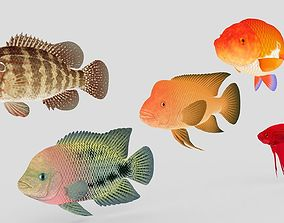 Fish Collection 01 3D model