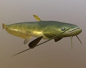 3D asset Catfish