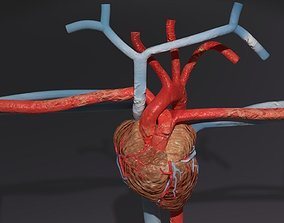 heart lung blood flow animated rigged particle blood 3D