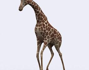 animated 3DRT - Giraffe
