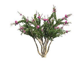 Crape Myrtle Tree 3D asset