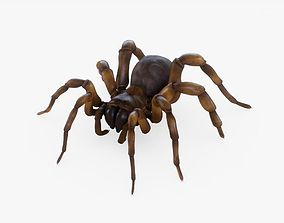 3D model realtime Trapdoor Spider Rigged