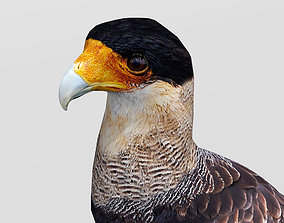 Crested Caracara 3D model low-poly