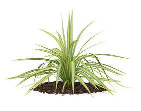 Yellow Yucca Plant Yucca arkansana 3D model