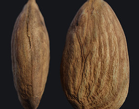 PBR Almond 3d scan-hlxvh