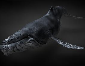 Humpback Whale C4D Rigged 3D model