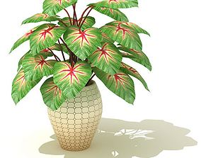 3D model Large Potted Indoor Plant