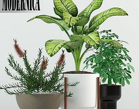 3D Plants collection 79 Modernica pots