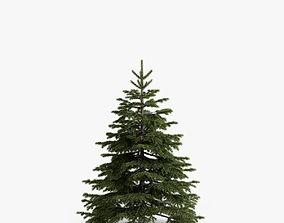 3D fir-tree 02