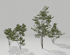 3D model VR / AR ready Little trees