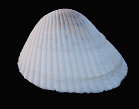 Cockie Sea Shell 3D asset