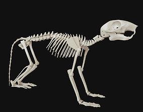 3D Squirrel skull