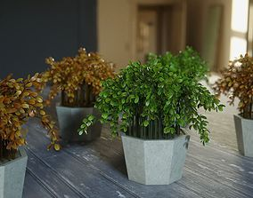 3D model Ornamental plants in pots