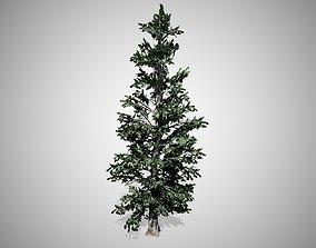 3D asset Blue Spruce Tree