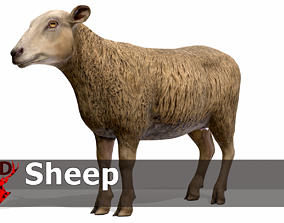 3D model animated low-poly PBR Sheep