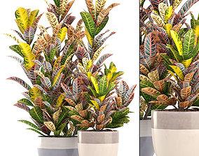 Croton 3D
