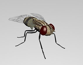 FLY INSECT 3D