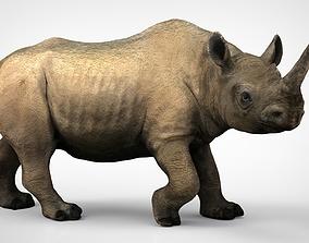 3D model White rhinoceros