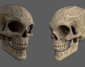 Stylized human skull 3D model