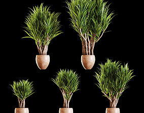 Set of Yucc plants in a pot 3D model