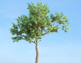 Tree With Leaves 3D model