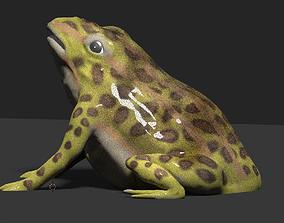 frog 3d model toad